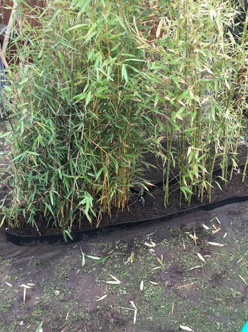 Rhizomsperre - Bambus eingrenzen