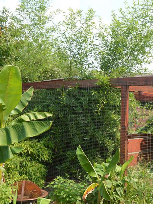 Bambus ohne Rhizomsperre